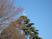 Img_0753a